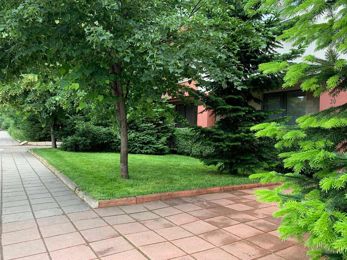 Правилната поддръжка на тревата през лятото